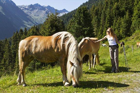 Bauernhöfe in Tirol