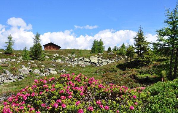 In der alpinen Zone geht es bunt zu.