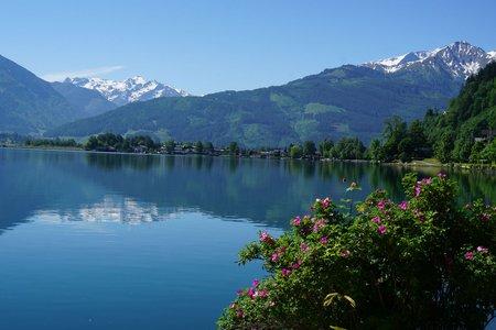 Rundwanderung Zeller See mit Thumersbacher Höhenpromenade