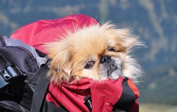 Hundetransport im Rucksack
