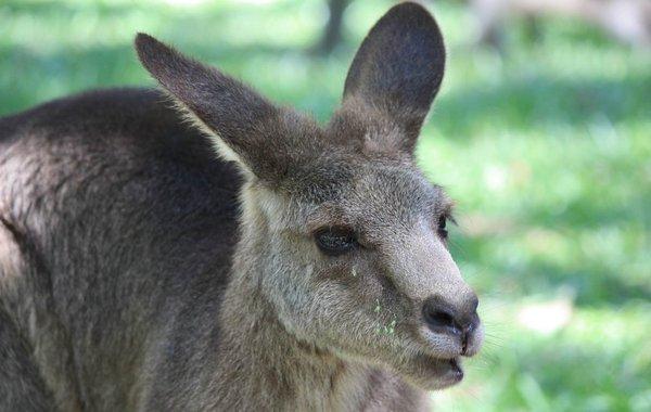 Besuch im Tarango Zo Sydney