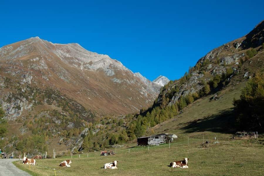 Weg zur Boderalm im Virgental