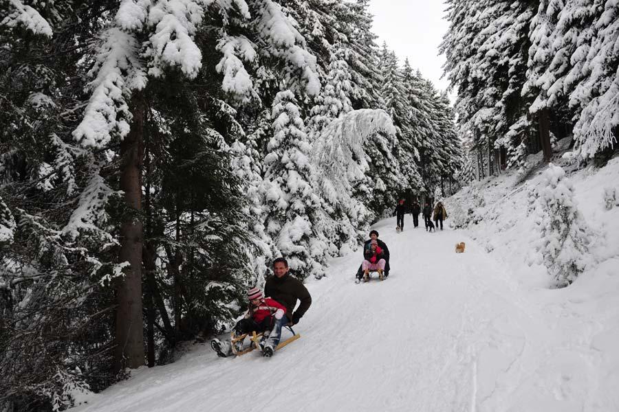Rodeln vom Volderberg in Tirol