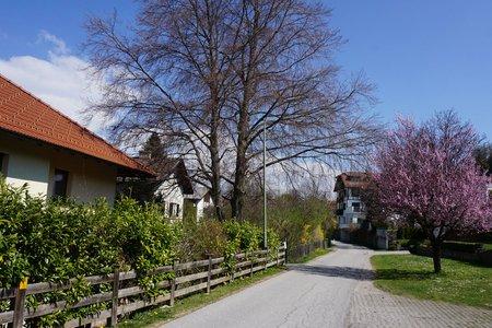 Igls-Lansersee-Teufelsmühle Runde von Judenstein