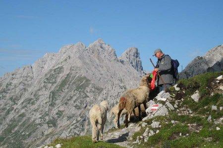 Verhalten in den Bergen
