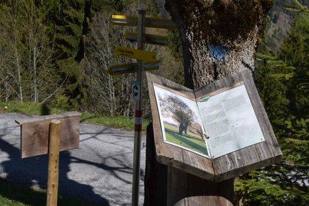 Thierbacher Kogl-Weg