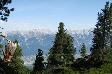 Outdoor-Wissen: Bäume und Pflanzen in den Alpen