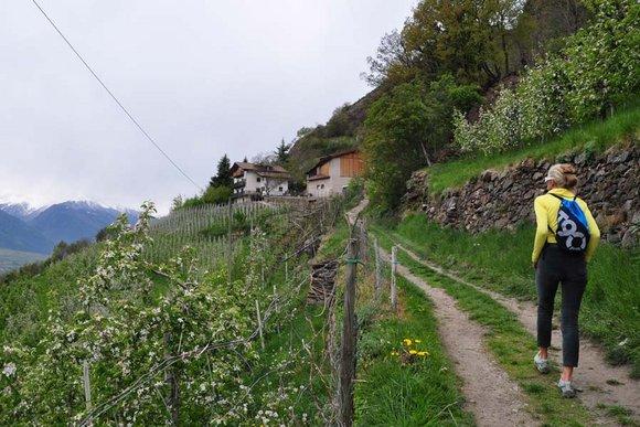 Vinschgau-Naturns, Latsch, Schlanders