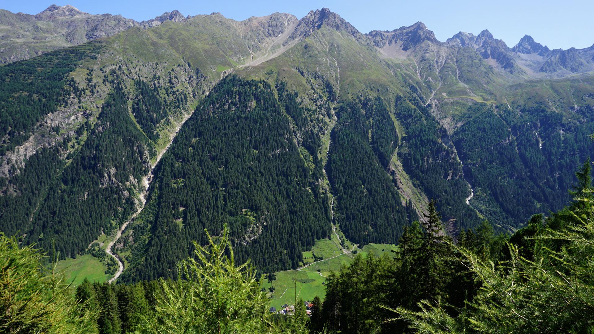 Arzler Alm Wanderung vom Plantzenhof - Almenrausch